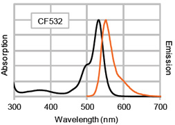 Figure 1. Absorption and emission spectra of CF™532 conjugated to goat anti-mouse IgG in PBS.