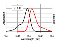Figure 1. Absorption and emission spectra of CF™543 conjugated to goat anti-mouse IgG in PBS.