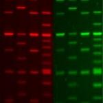 PAGE GelGreen Nucleic Acid Gel Stain, 10,000X in water