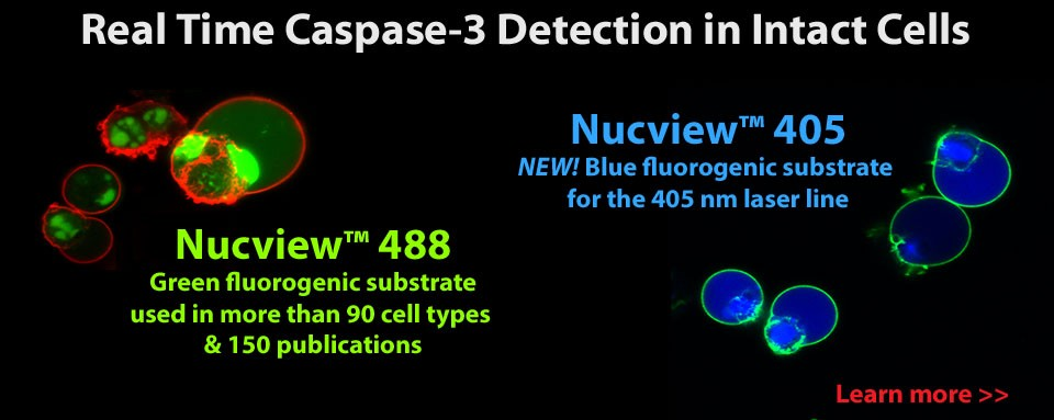 NucView Caspase-3 Substrates
