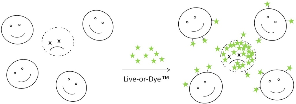 Live-or-Dye™ Fixable Viability Stains