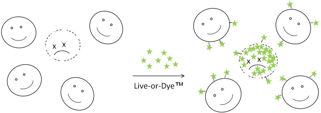 Live-or-Dye