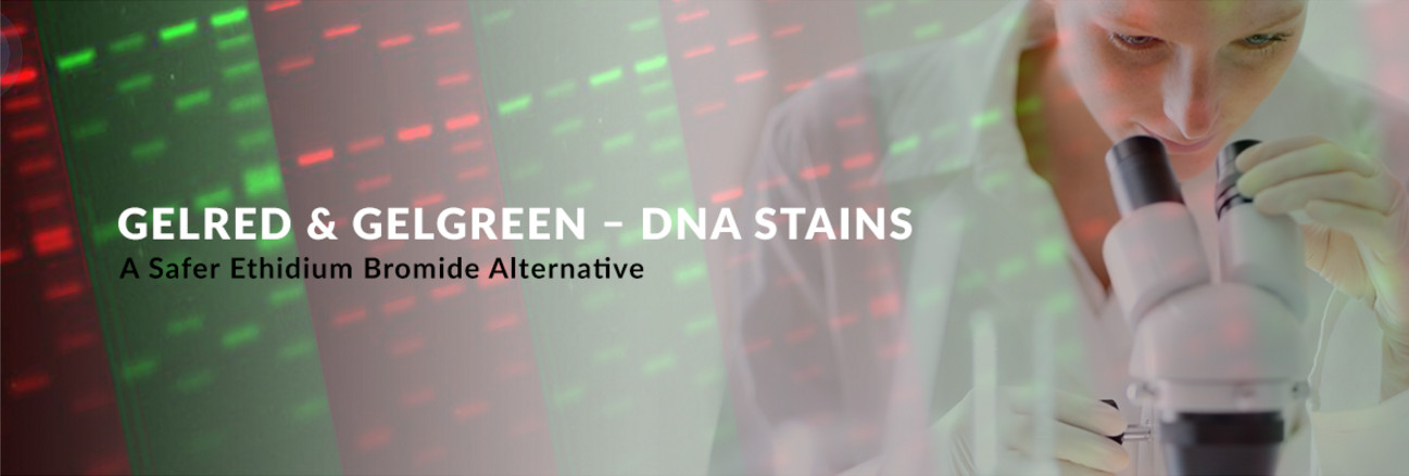 DNA Stains