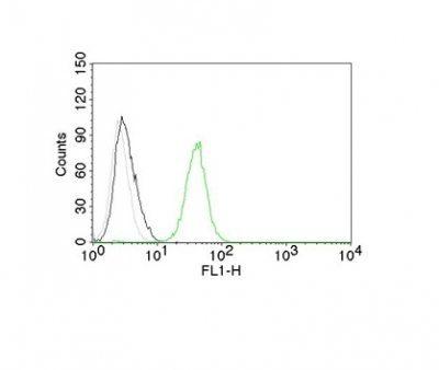 Monoclonal anti CD31 / PECAM 1 (C31.7)