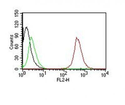 Monoclonal anti CD63 (NKI C3)