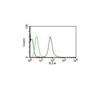 Monoclonal anti Cytokeratin, pan (AE 1 / AE 3)