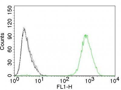 Monoclonal anti EGFR (GFR450)