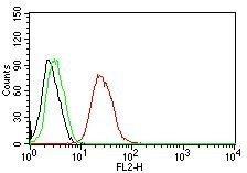 Monoclonal anti Estrogen Receptor beta 1 (ERb455)