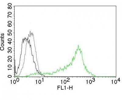 Monoclonal anti Nucleolin (364-5)