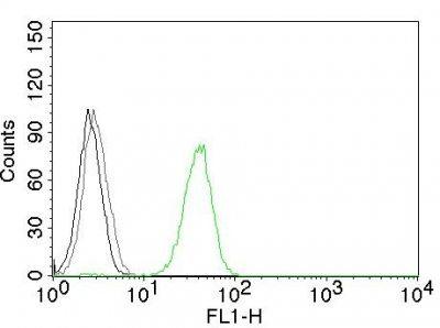 Monoclonal anti CD31 / PECAM 1 (JC/70A)