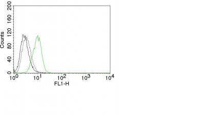Monoclonal anti p27 / KIP1 (SX53G8)