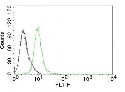 Monoclonal anti p27 / KIP1 (KIP1/769)