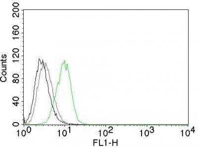 Monoclonal anti p27 / KIP1 (DCS 72.F6)
