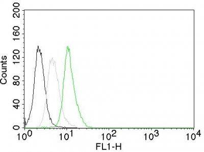 Monoclonal anti Cyclin D1 (CCND1/809)