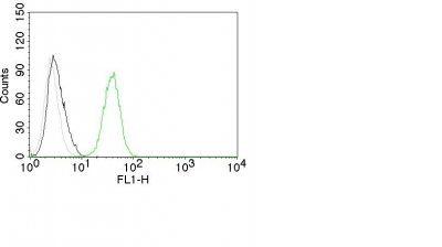 Monoclonal anti CD31 / PECAM 1 (C31.10)
