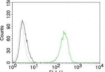 Monoclonal anti CD71 (TFRC/1059)