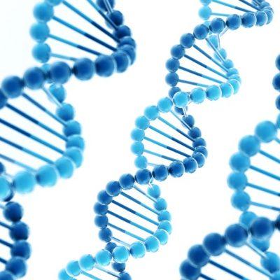RNase-Free Calf Thymus DNA, 1 mg/mL