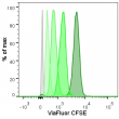 Cell division tracking with ViaFluor™ CFSE in Jurkat cells. Cells were labeled with ViaFluor™ CFSE Cell Proliferation Dye, then maintained in culture for various lengths of time to allow cell division. From right to left: 0 days (darkest peak), 1 day, 2 days, or 3 days (lightest peak). Unstained cells are shown in gray. Fluorescence was detected in the FITC channel of a BD LSRII flow cytometer.