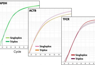 probe PCR triplex figure
