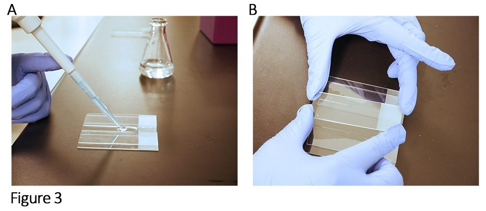Tech Tip Imaging Bacteria Using Agarose Pads Biotium