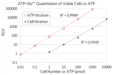 quantitation of ATP standard curve with assay kit