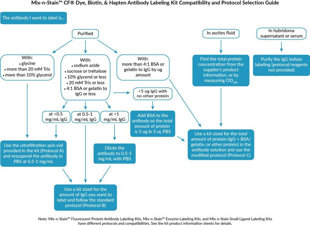 Auswahlhilfe Antikörper-Labeling-Kits