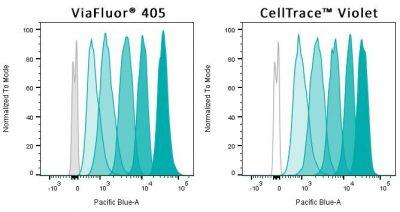 cell proliferation dye