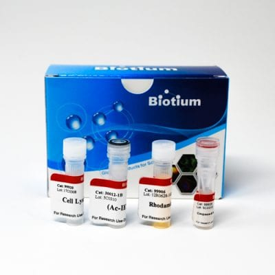 Caspase-8 IETD-R110 Fluorometric HTS Assay Kit