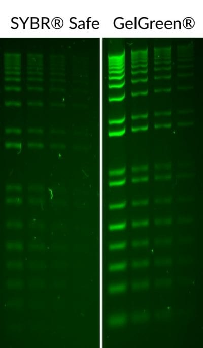 GelGreen® Nucleic Acid Gel Stain