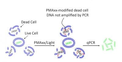 Viability PCR Starter Kits