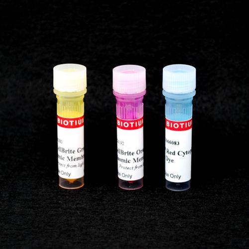 CellBrite™ Cytoplasmic Membrane Dyes