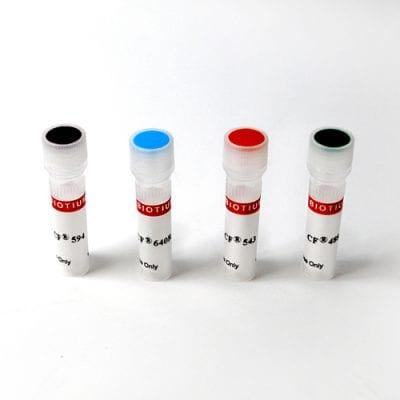 Concanavalin A (Con A) CF® Dye Conjugates