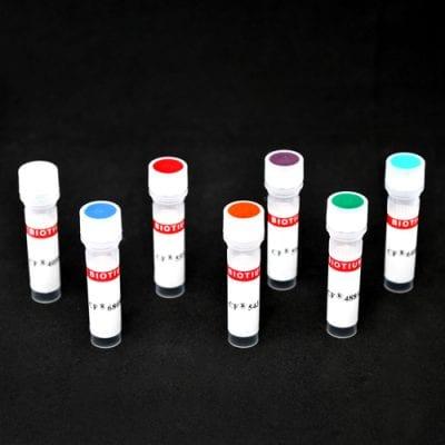 Annexin V CF® Dye Conjugates, Azide-Free, Lyophilized