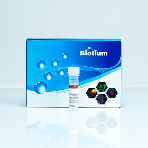 TMR Biocytin