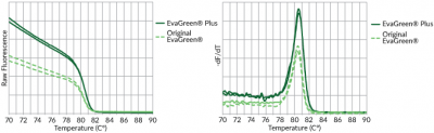 EvaGreen Plus Melt Curve Analysis